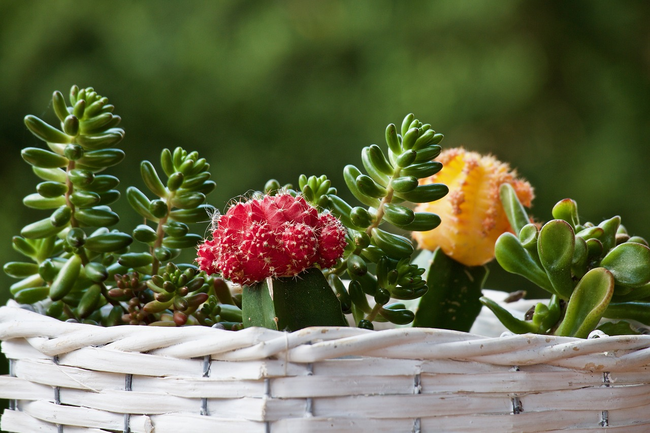 Ekologia i natura w domu czyli jakie kwiaty do donicy na taras?